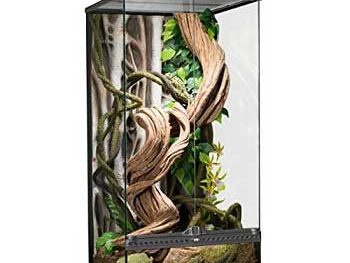 exo terra rainforest terrarium