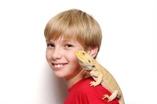 bearded dragon as a pet