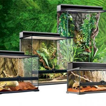 Enclosures & Terrariums
