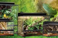 Exo Terra Terrariums: [year] Comprehensive Buying Guide